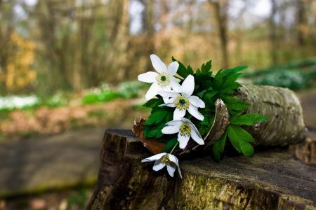 春天,鲜花,美丽,树桩