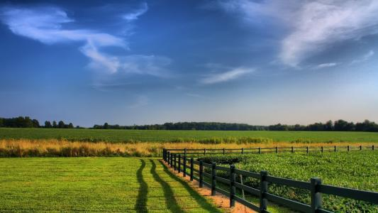 牧场,草,木栅栏
