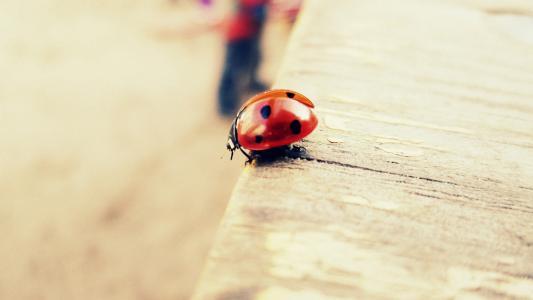 瓢虫,甲虫