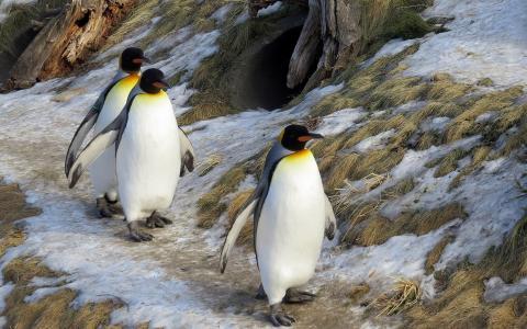 企鹅,冬天,山