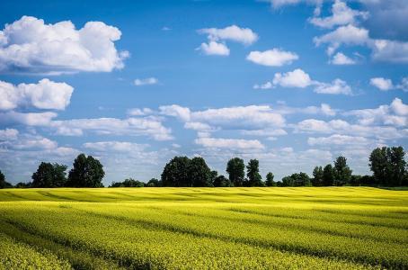 领域,天空,云,夏天,美女,树木
