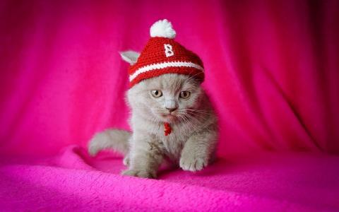 帽子,小猫,粉红色的背景