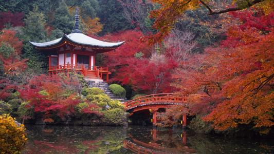日本佛教寺庙Da,,树木