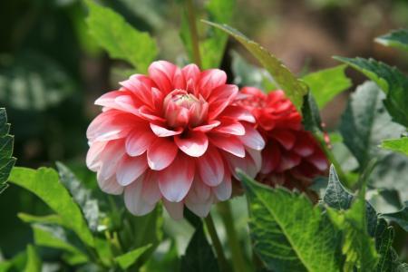 心情,鲜花,散步,花卉,早晨,太阳,牡丹