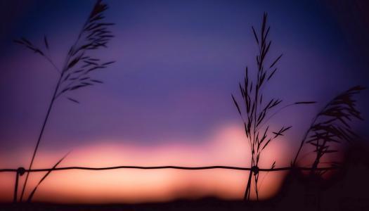 背景,小穗,日落,天空