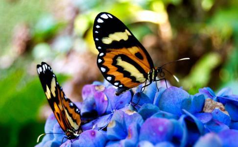 美丽,鲜花,坐在,蝴蝶