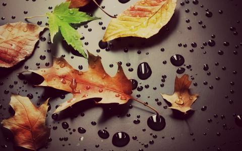 宏,叶子,叶子,叶子,滴,水,露水,绿色,黄色,宏,叶子,下降,露水,背景,壁纸,宽屏,全屏,宽屏,高清壁纸,背景,壁纸