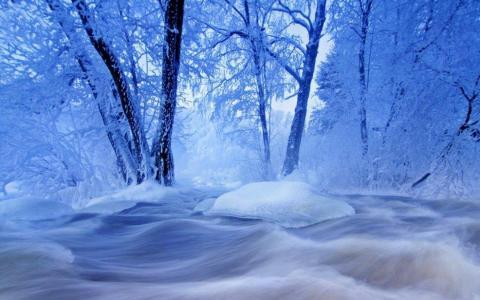 冬天,树木,雪