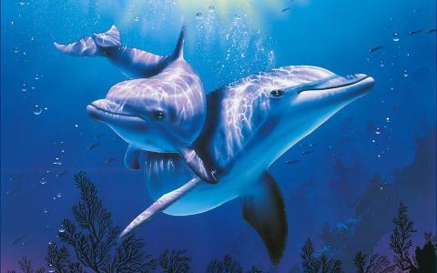 瑞士,基督教,海豚,美丽,海,蓝色,水族馆