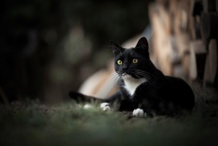 动物,猫,看,猫,散景