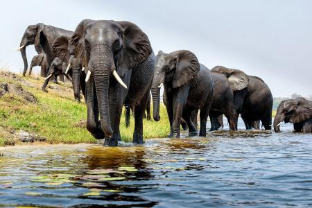 壁纸动物,大象,河,福特。