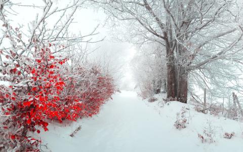 雪巷,树木,叶子,雾
