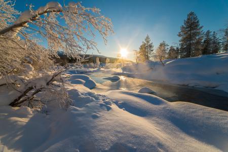 性质,冬天,雪,河,树,太阳,光线,早上