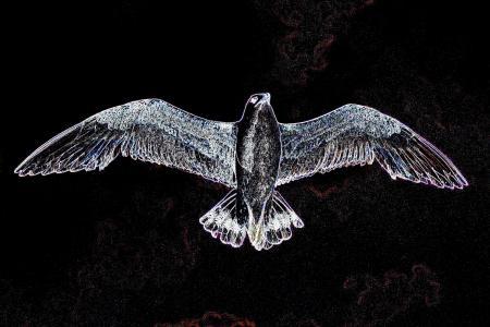 海鸥,天空,飞行,抽象