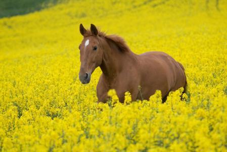 动物,田地,马,马,花,种马,植物,照片,马,马,天空,性质
