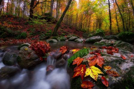 Saeed Younesi,自然,秋天,森林,小溪,石头,叶子