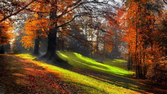 秋天,公园,叶子