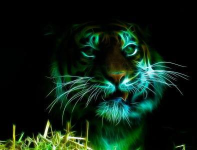 3D,3D,老虎,photoshop,黑暗的背景