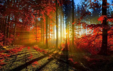 森林,树木,路,秋天,叶子