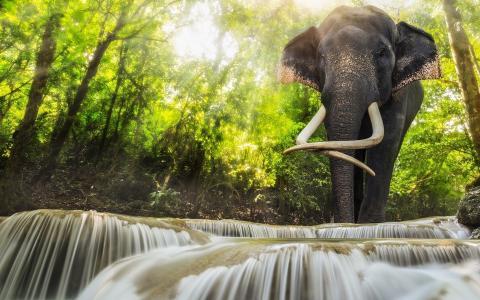 自然,河流,小溪,瀑布,水,photoshop,大象,印度,丛林,森林,光线,光,树木
