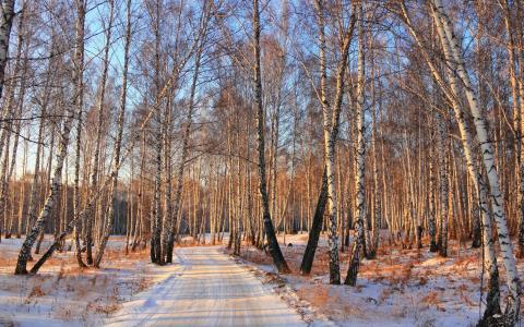 雪,桦木,冬季,森林,路