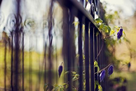 植物,重点,蓝色,围栏,围栏,鲜花,格子