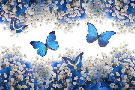 蓝色,白色,鲜花,开花,蝴蝶,花朵,蝴蝶
