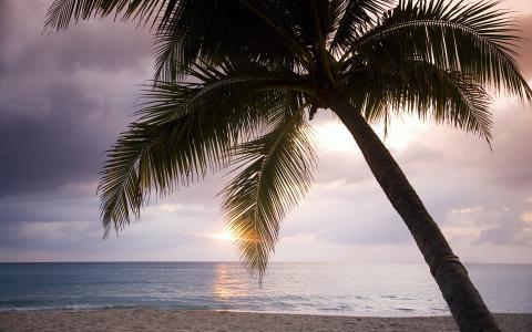热带地区,海洋,牙买加,棕榈树