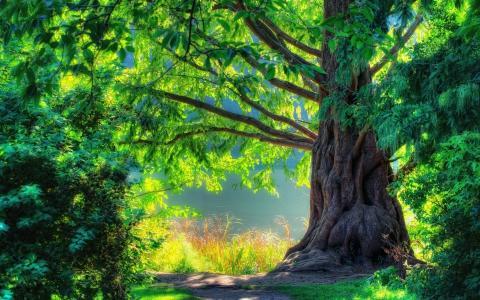 美丽,森林