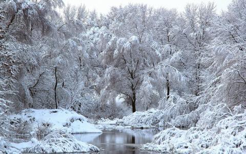 雪,树,河,冬天