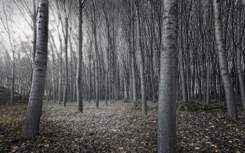 自然,森林,树木