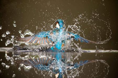 翠鸟,钓鱼,美女,鸟,水,翅膀,喷雾