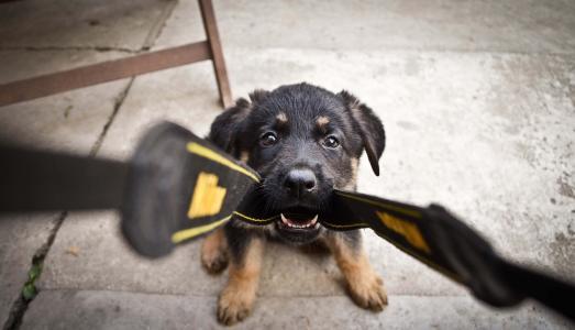 狗,照片,积极