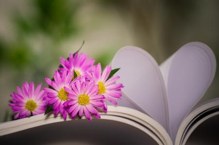 书,床单,心,鲜花,夏天