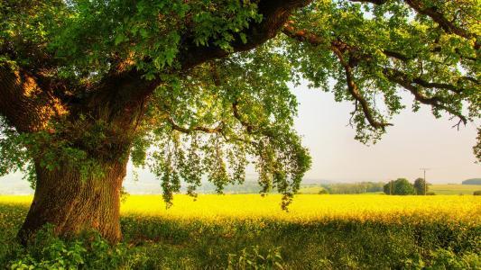 树,绿叶,领域,草