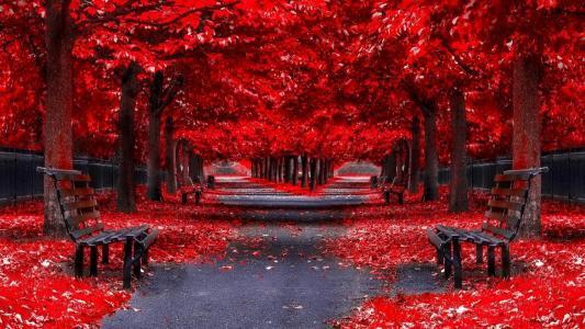 秋天,落叶,公园,长凳,树木