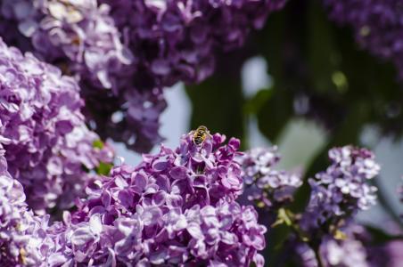 AristovArt,自然,风景,自然,鲜花,鲜花