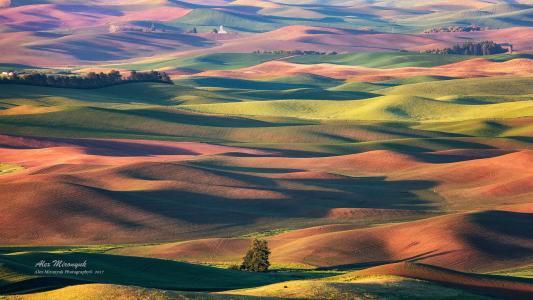 美国,华盛顿,Paluz,田地,丘陵,小麦,黑麦,燕麦,油菜,Alex Mironyuk