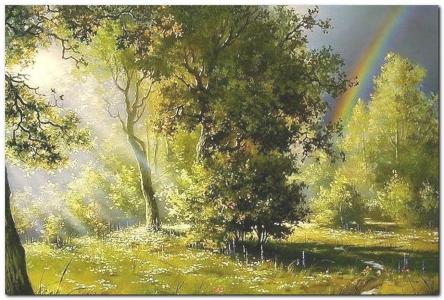 森林,绿色,雨,太阳光线,彩虹