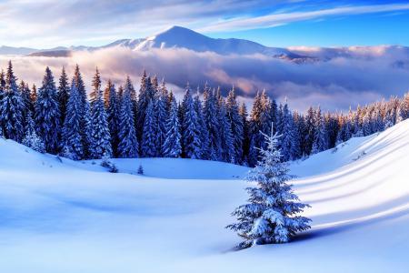 冬天,性质,山,雪,超级照片