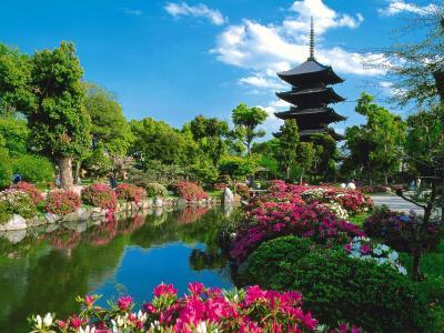 日本,东京寺,在京都