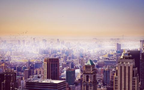 城市,鸟类,建筑物,天空,纽约