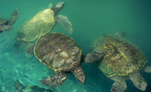 动物,海龟