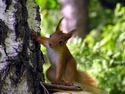 松鼠,好奇心,木头
