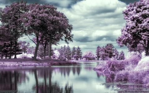 河,森林,紫罗兰,红外,摄影
