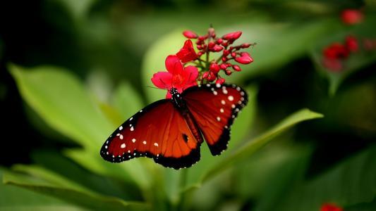 蝴蝶,鲜花,性质,美容,背景
