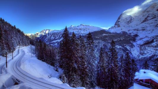 路,冬天,森林,树木,山