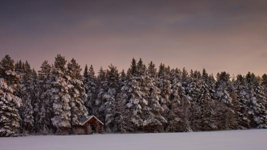 冬天,森林