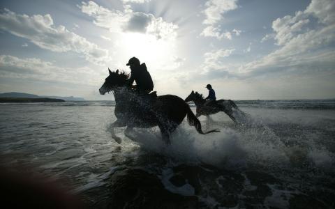 性质,海,海滩,马,车手,飞溅,下降,照片,背景,壁纸,图像