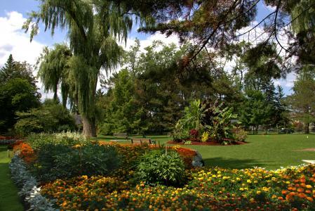 美国,花园,万寿菊,草坪,树木,灌木丛